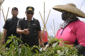 Wagub Uu Ruzhanul Tinjau Potensi Agrowisata di Sukabumi Utara