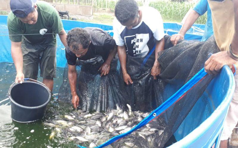 Dukung Lumbung Ikan Nasional, KKP Gelar Pelatihan Budidaya Ikan Sistem Bioflok